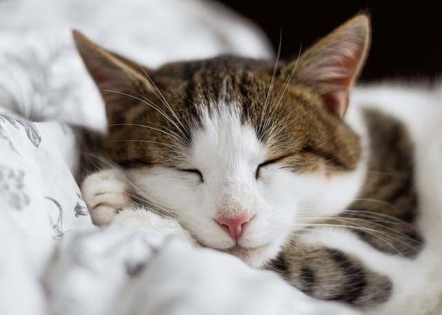 猫がケミカルライトの溶剤を食べた時の症状