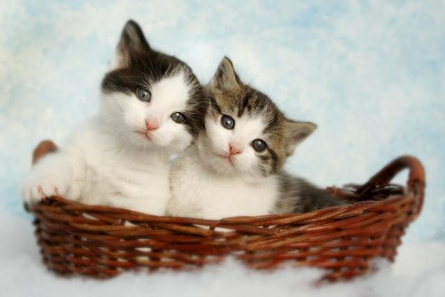 猫が夏祭りの光るブレスレット、ケミカルライトを舐めても安全?