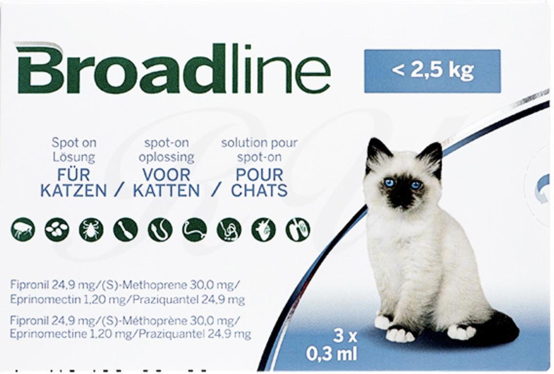猫のブロードラインとは?