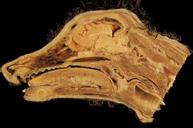犬・猫における解剖学の勉強の重要性