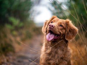 犬が玉ねぎを食べてしまった時の応急処置と対処法