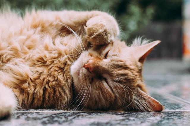 猫が夏祭りの光るブレスレット、ケミカルライトを舐めた時の対処は?