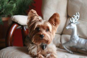 犬が玉ねぎ中毒を起こした時の治療