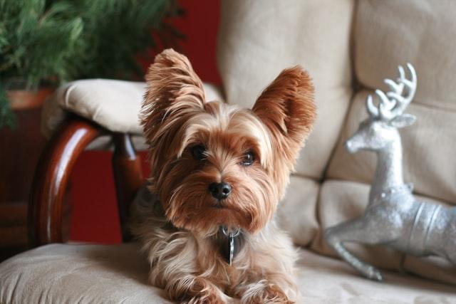 犬がマカデミアンナッツを食べてしまった時の応急処置と対処法