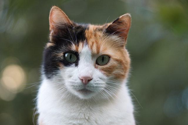 猫がエビを食べてしまった時の中毒の症状