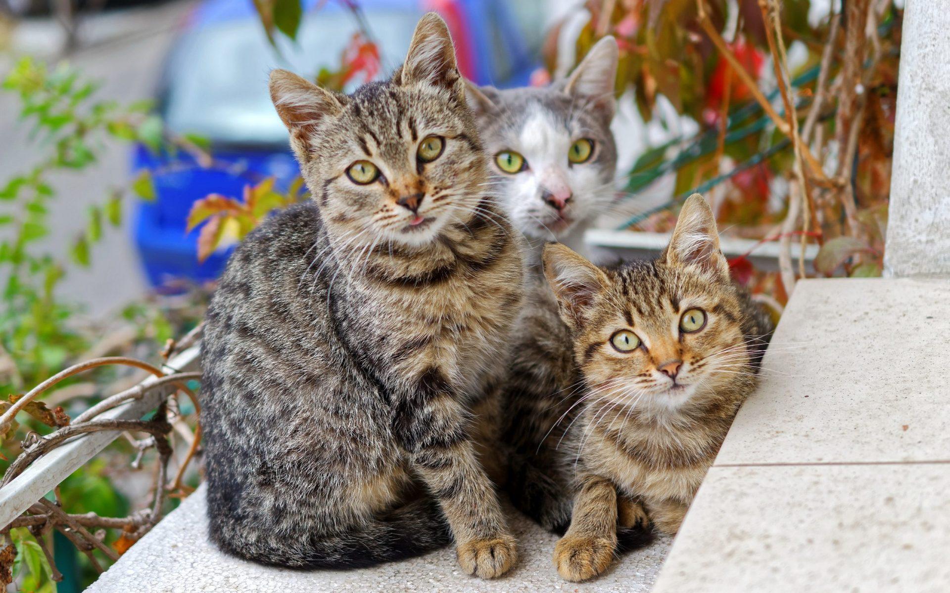 猫がエビを食べてしまった時に起こる病態