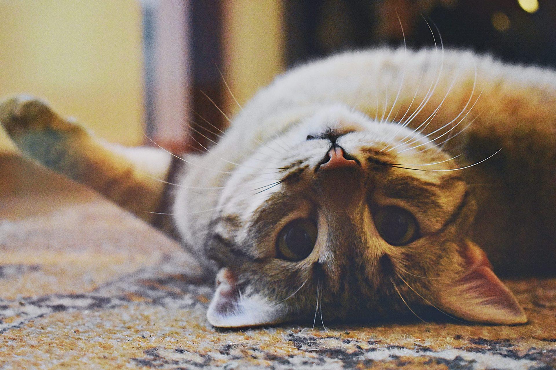 猫がエビを食べた時の対処