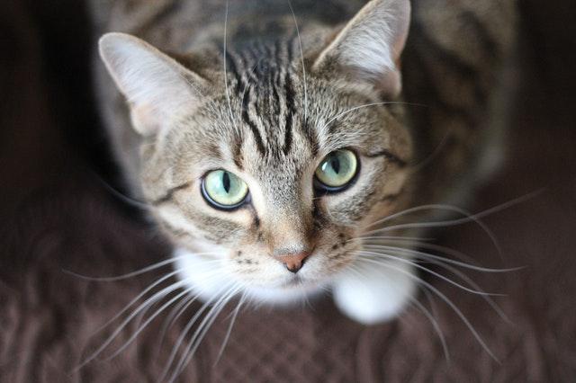 猫がぶどう中毒を起こした時の予後
