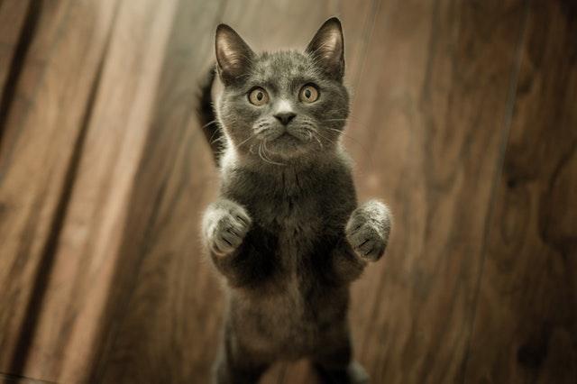 猫の皮膚糸状菌症の予防