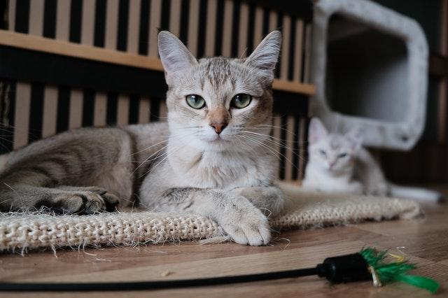 猫がエビを食べてしまった時の応急処置と対処法