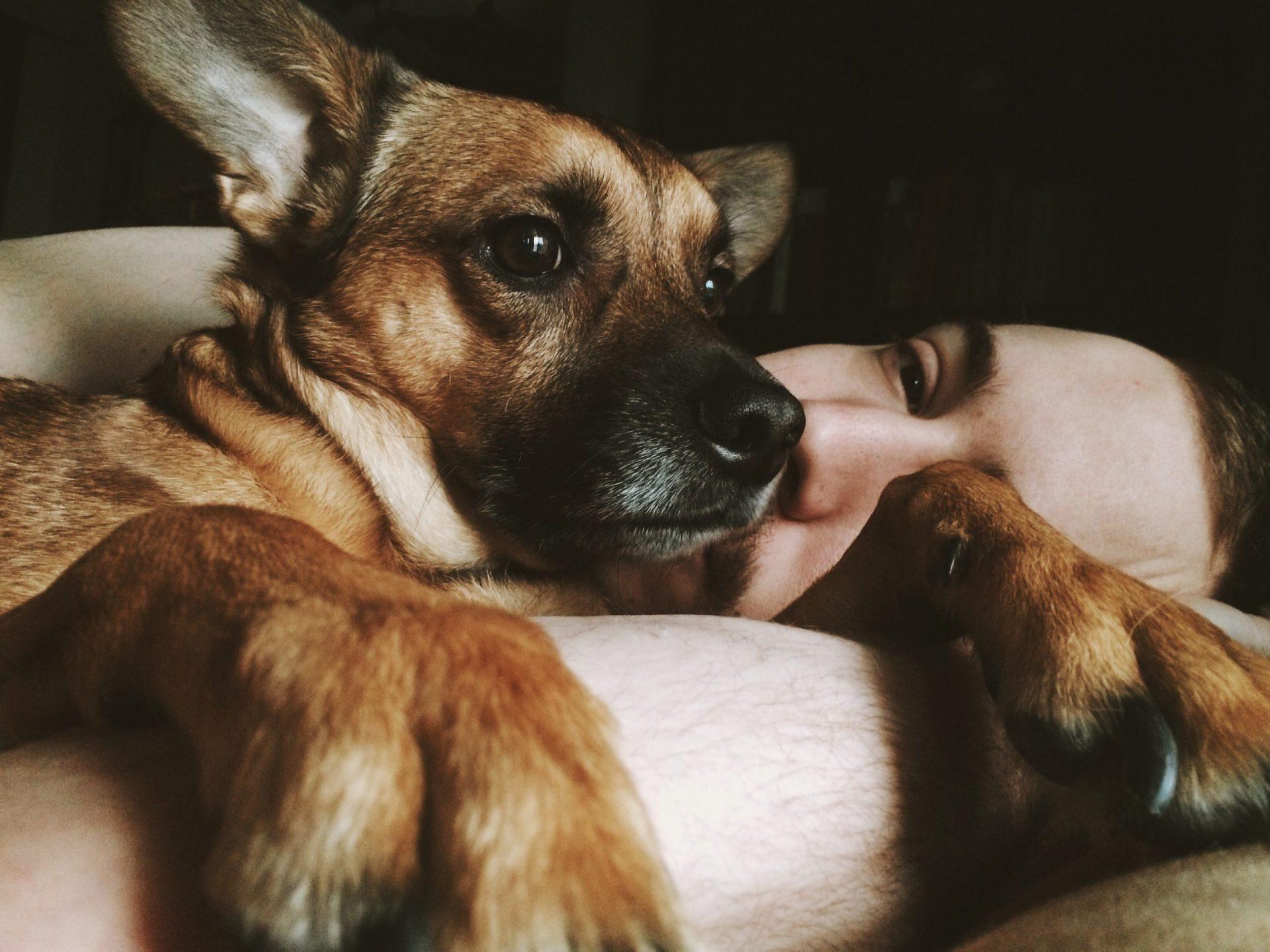 犬の胃拡張・胃捻転症候群とは?