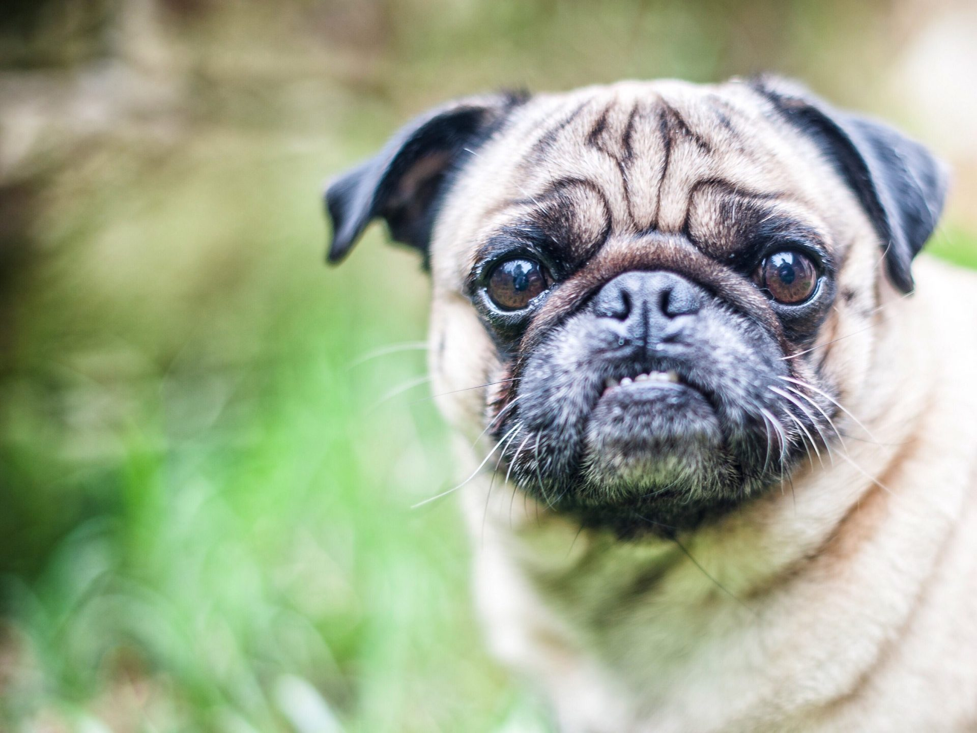 犬がユリを食べてしまった時の応急処置と対処法
