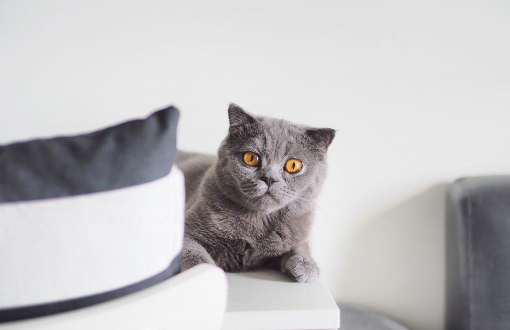 獣医師解説!猫ひっかき病〜症状、原因、治療法〜