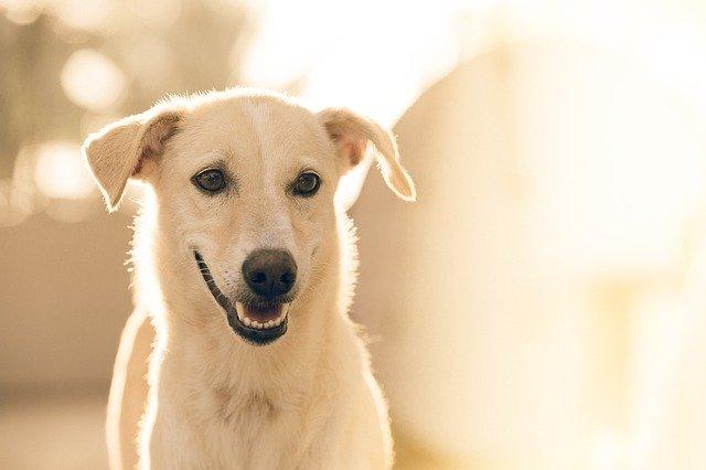犬がタバコを食べて、ニコチン中毒を起こした時の治療