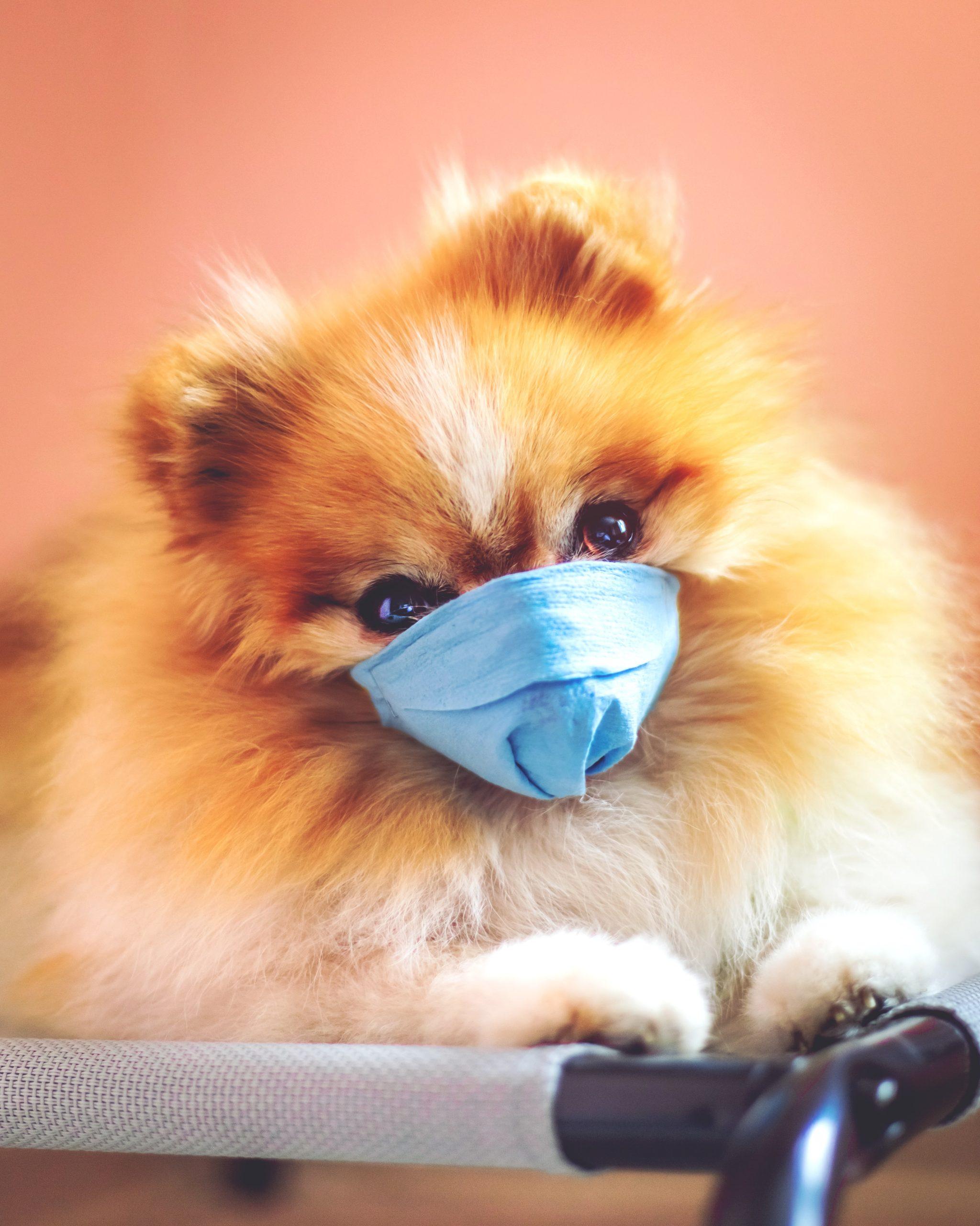 犬パスツレラ症の宿主
