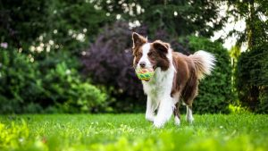 犬がネギ中毒を起こした時の治療