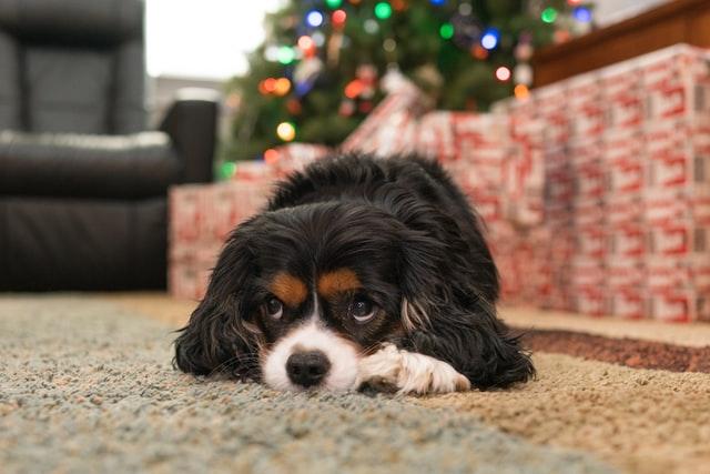 犬がアスピリン中毒を起こした時の治療