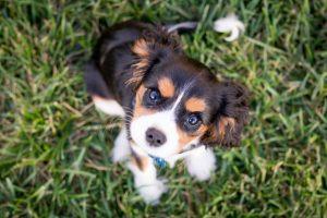 犬が有機リン除草剤殺虫剤中毒を起こした時の予後