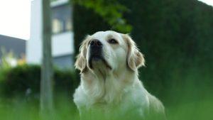 新型コロナウイルスに感染した飼い主の犬との接し方