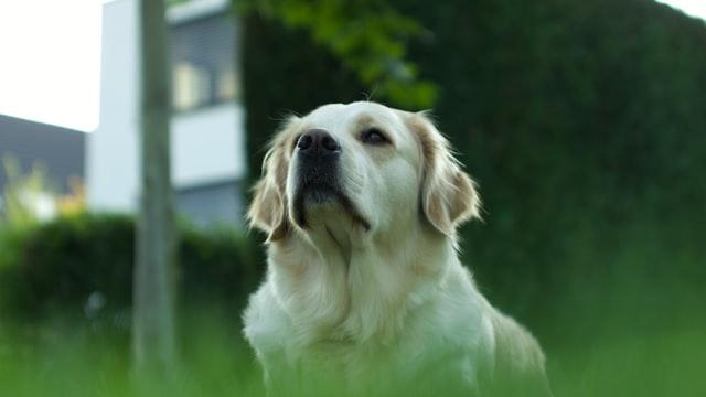犬がロキソニンを食べた時の対処