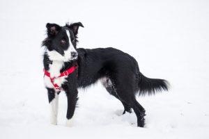 犬が有機リン除草剤殺虫剤を食べてしまった時の応急処置と対処法