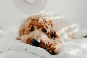 新型コロナウイルスの犬の感染報告