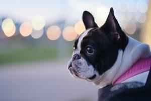 犬が有機リン除草剤殺虫剤を食べてしまった時の中毒の症状