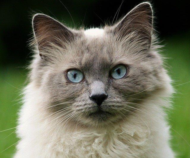 猫に寄生するノミって?!