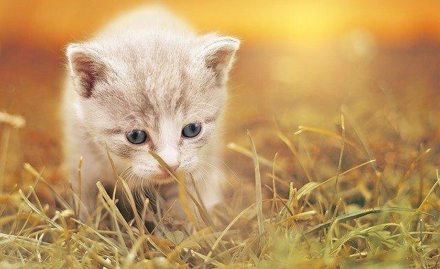 どれが安いの?猫のノミ予防薬の種類!