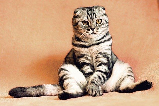 猫のフィラリア薬の種類!