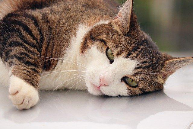 猫がアボカドを食べてしまった時の応急処置と対処法