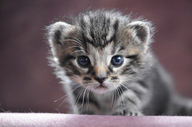 どうして必要?猫のノミの予防!