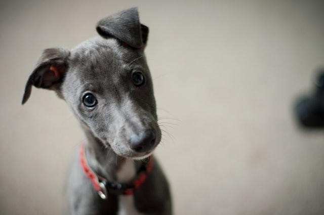 犬のアスピリン中毒の予防