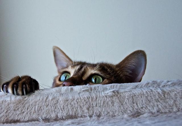 猫がマカデミアンナッツを食べてしまった時に起こる病態