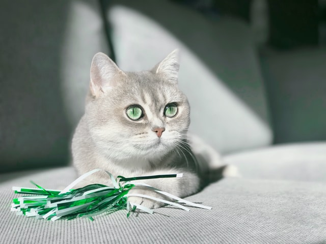 猫の異物の予防