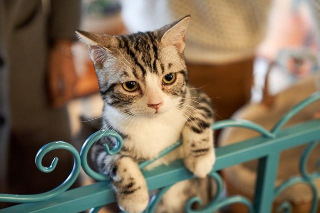 猫がロキソニンを食べた時の対処