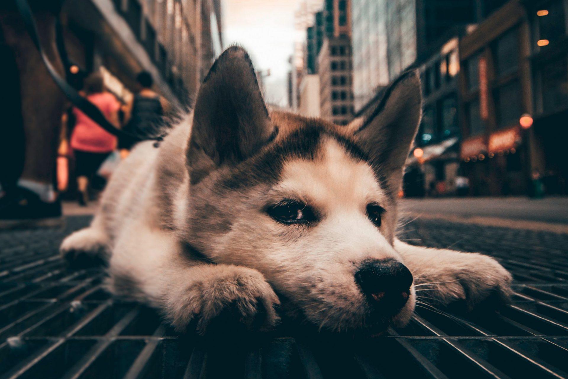 犬のユリ中毒の予防