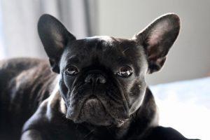 犬がネギを食べてしまった時の応急処置と対処法
