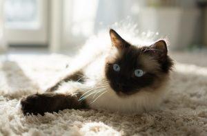 猫が殺虫剤、除草剤中毒を起こした時の予後