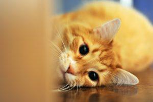 猫が殺虫剤、除草剤を食べてしまった時の応急処置と対処法