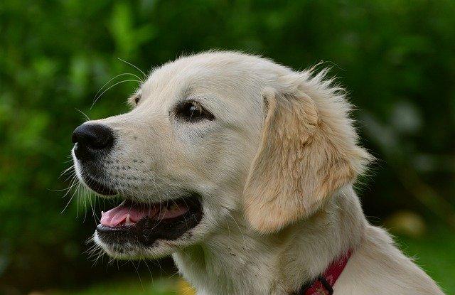 犬のカルバメート系殺虫剤中毒の予防