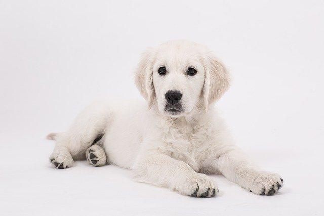 犬がピレスリン除草剤殺虫剤を舐めてしまった時に起こる病態