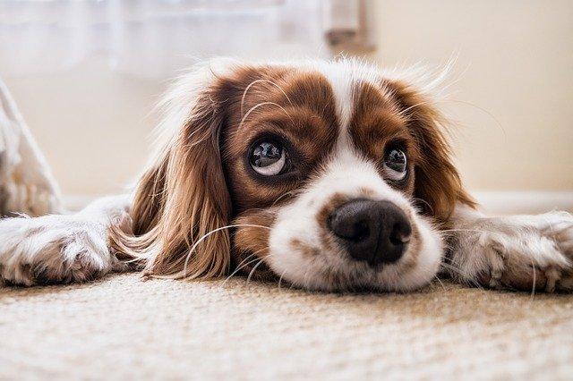 愛犬、愛猫が肥料を食べた時の検査所見