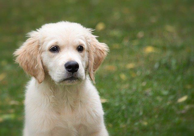 犬、猫がヘビに噛まれた時の抗ヘビ毒素治療