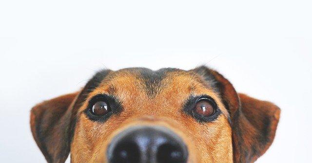 犬がカルバメート系殺虫剤中毒を起こした時の治療