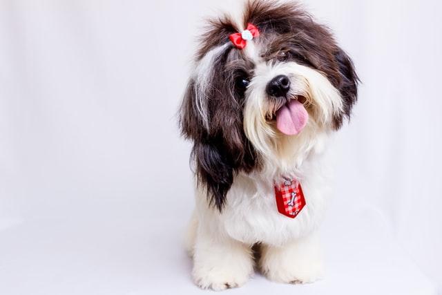 犬の甲状腺機能低下症の検査