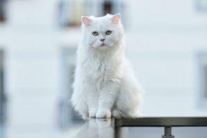 猫がニンニク中毒を起こした時の予後