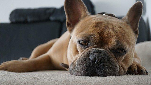 どれが安いの?犬のノミダニ予防薬の種類!