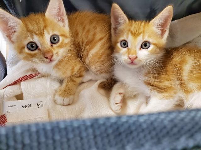猫がロキソニンを食べてしまった時に起こる病態