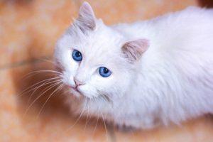 猫のネギ中毒の予防